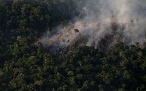 'A grande mentira verde': como a destruição da Amazônia vai além do desmatamento
